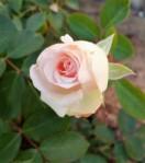 1 - Joy's Pink Phase