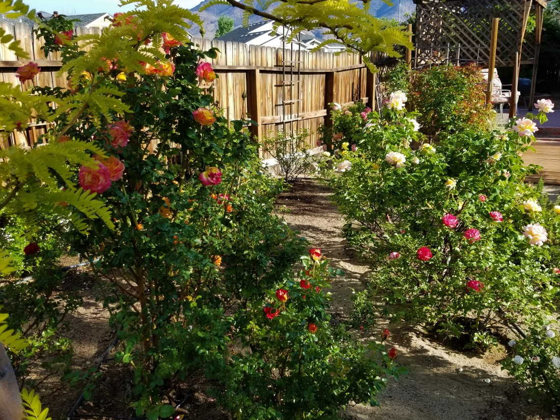 Rose Garden in Spring 2018