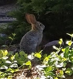 Bunny - Spring 2018